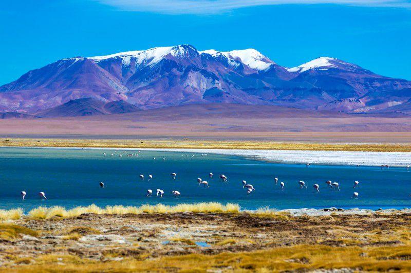Lago com flamingos no Deserto do Atacama