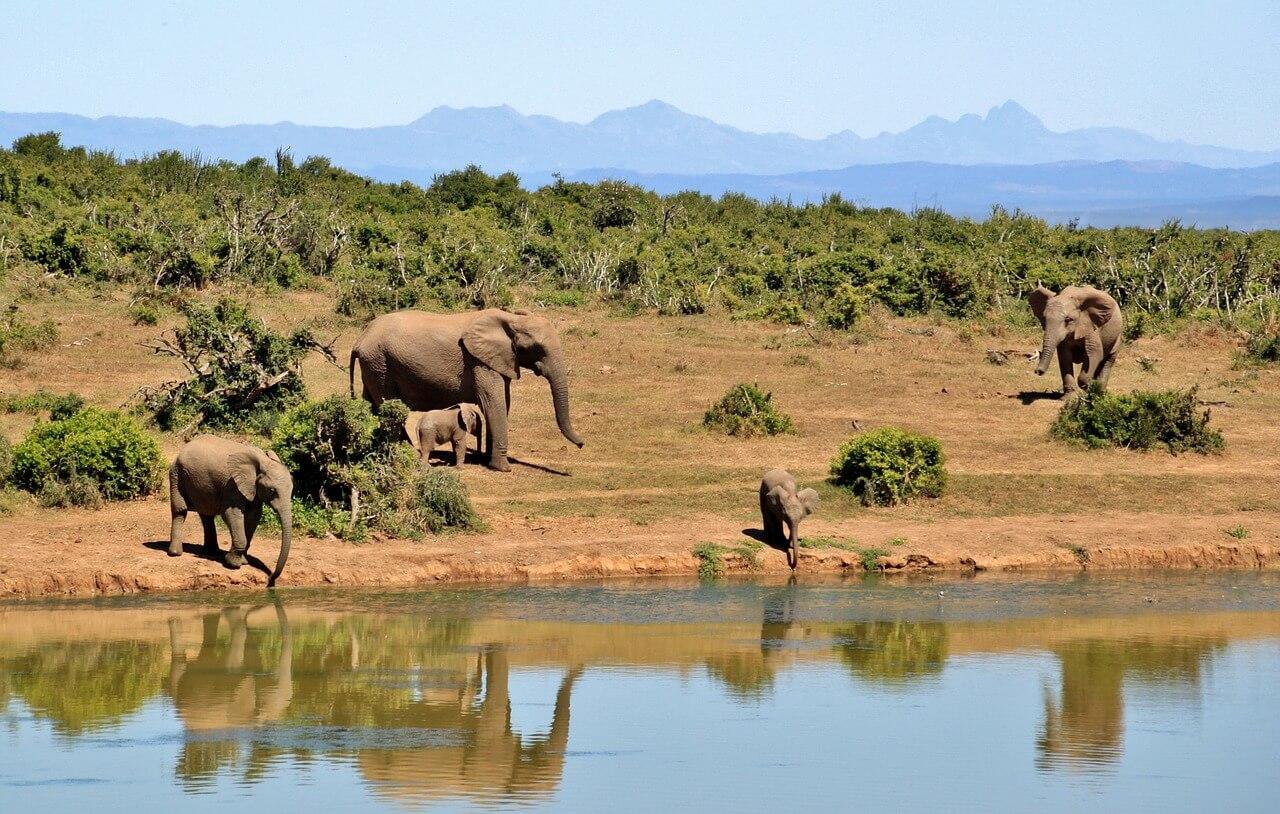 melhores safaris africa