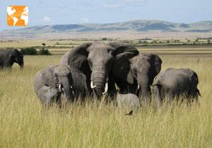 Pacote de viagem para Tanzânia