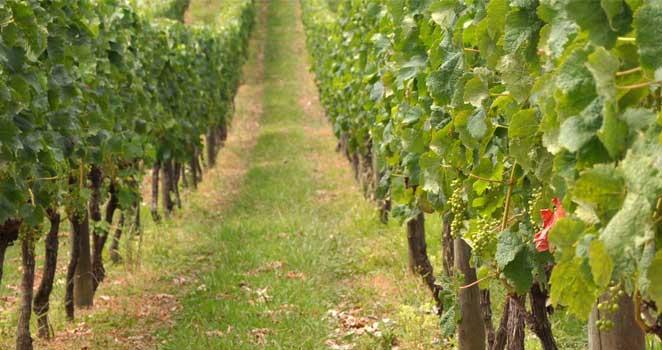 Enoturismo: Melhores Destinos para Degustar Vinhos na América do Sul